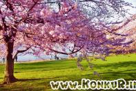 نحوه مطالعه در دوران طلایی نوروز و فصل بهار