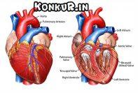 فیلم آموزشی تدریس فصل قلب زیست به روش رمزگردانی