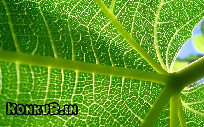 105 سوال شمارشی دشوار زیست گیاهی پایه دهم و یازدهم