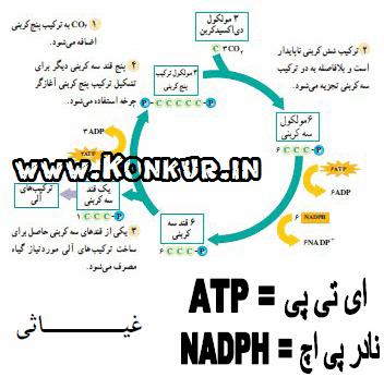 طریقه محاسبه یو پی اس