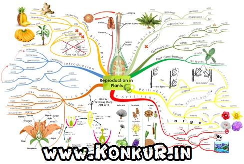 جزوه تولید مثل در گیاهان